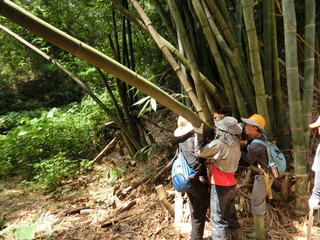 學員合力砍竹