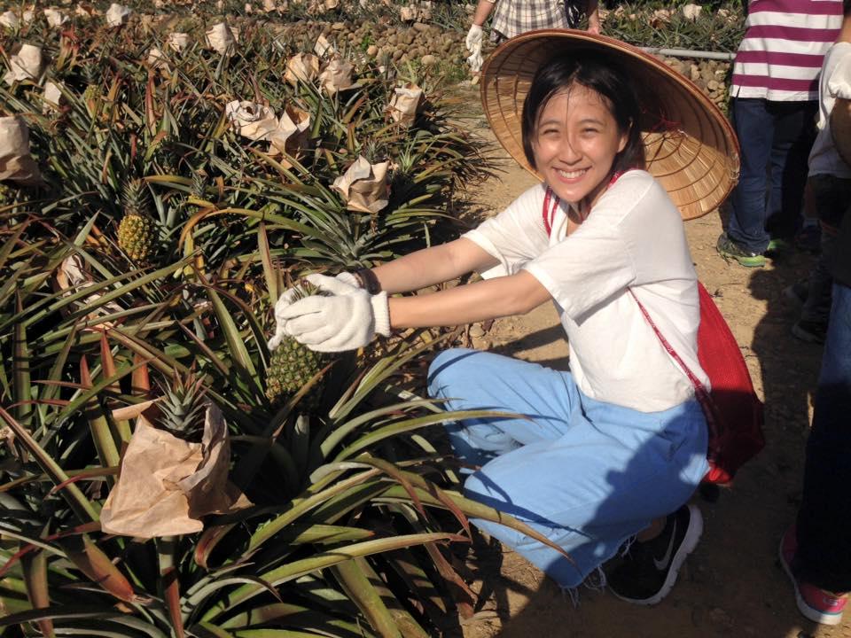 學員採收鳳梨