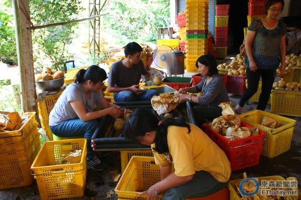 ▲台南大學團隊學生經果農示範體驗採收裝箱過程。
