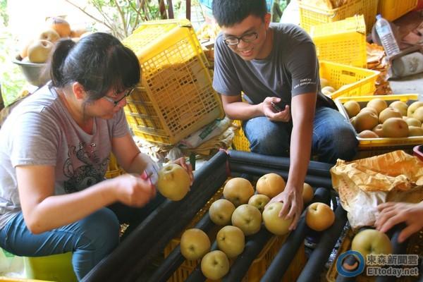 ▲台南大學團隊學生體驗採收裝箱過程。(圖/教育部提供,下同)